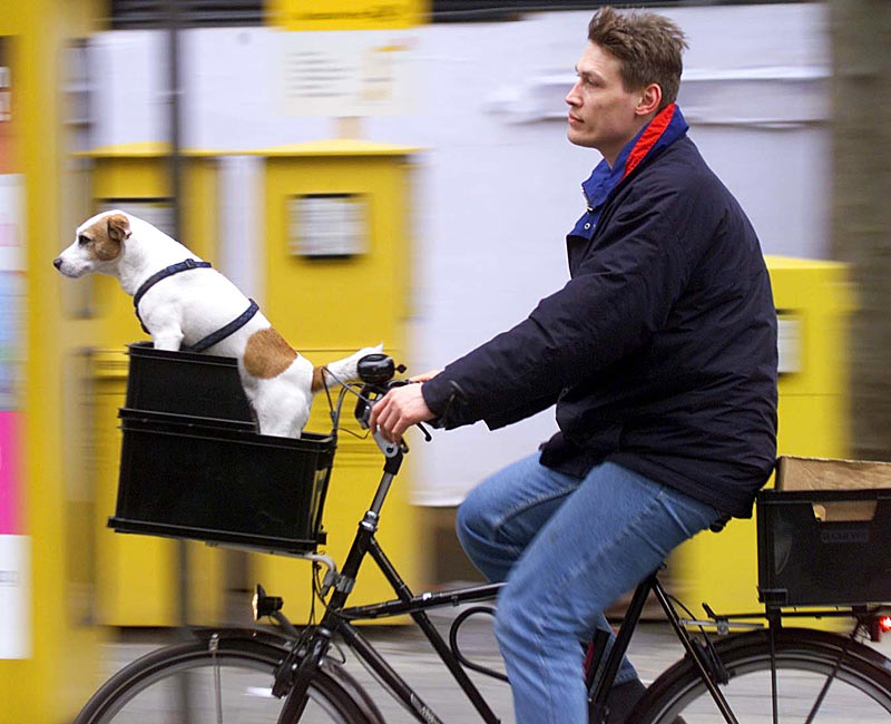 hundekorb fahrrad hinten